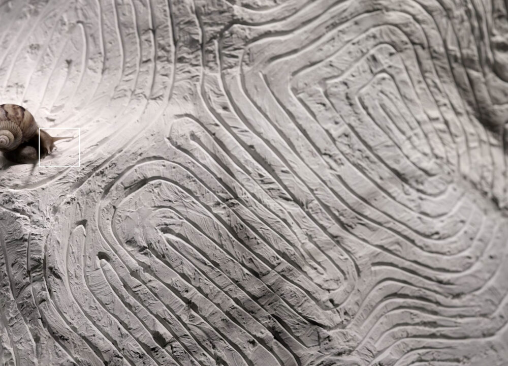 A snail sits on light grey clay marked with thin grooved patterns..